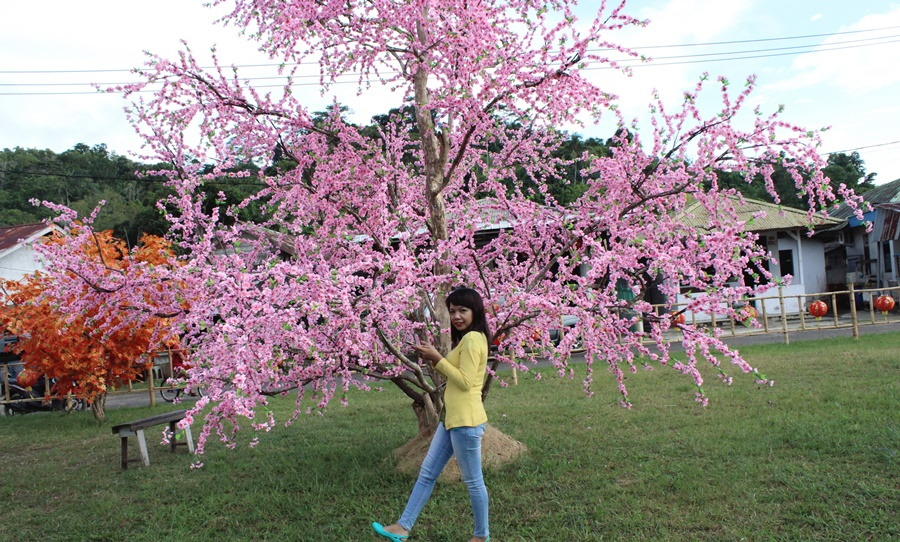 bunga-mei-hwa-singkawang2