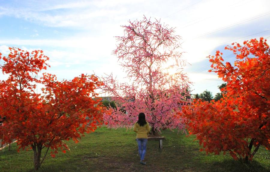 taman-bunga-mei-hwa