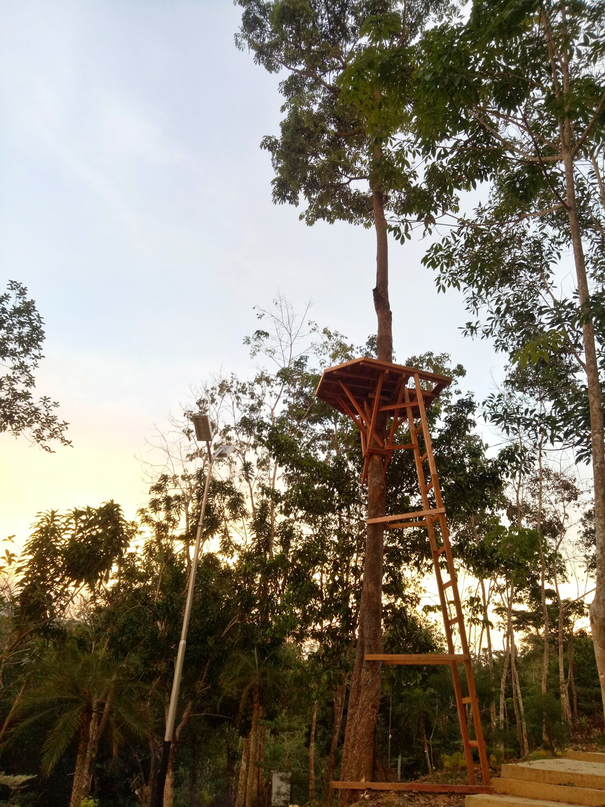rumah_pohon_pertama_jadi