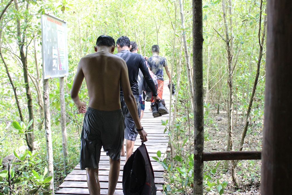 volunter_penanaman_mangrove